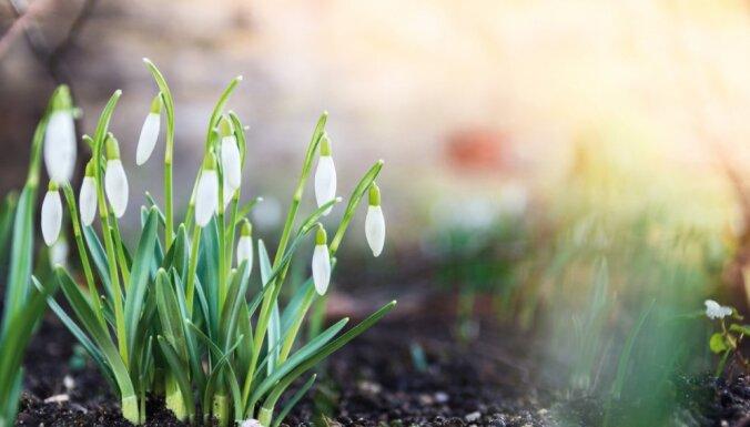 Календарь садовода: Чем заняться на участке в марте