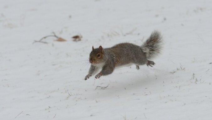 Sniega segas biezums Alūksnē pieaudzis līdz septiņiem centimetriem