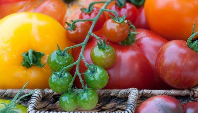 Ar šķiņķi pildīti tomāti aukstajam galdam
