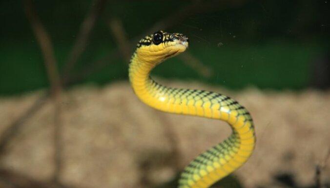 Почему змеи такие разноцветные? Похоже, все дело в печени