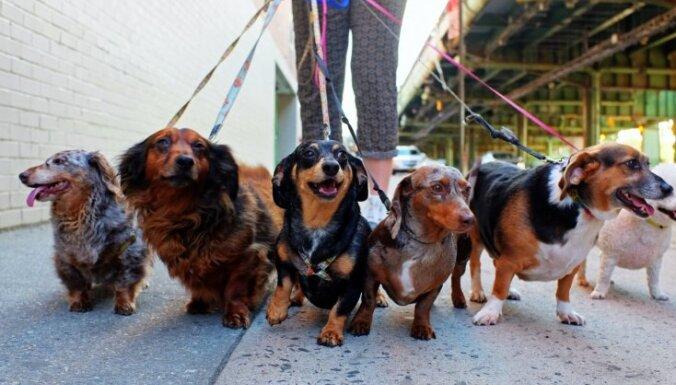 Собаки оказались эффективнее тестов на коронавирус