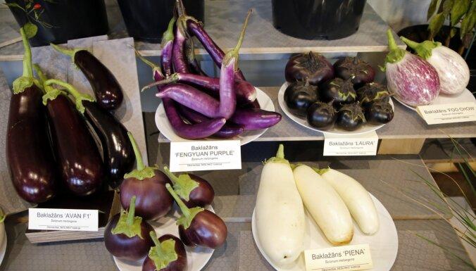 Foto: Dabas muzejā skatāma neparasto dārzeņu un ārstniecības augu izstāde
