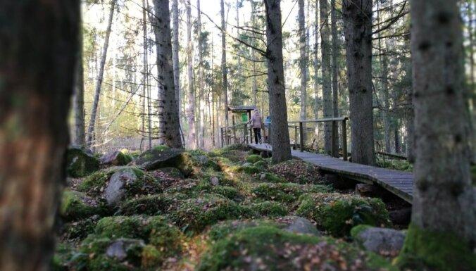 ФОТО. Таинственные камни в Курземе: прогулка по природной тропе в Калтене