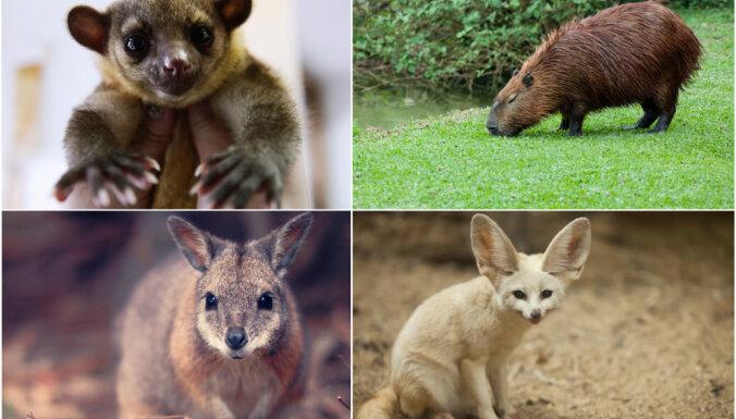 Четыре вида экзотических животных, которые стали домашними любимцами