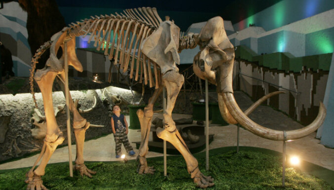 В Подмосковье нашли череп мамонта с кладом внутри