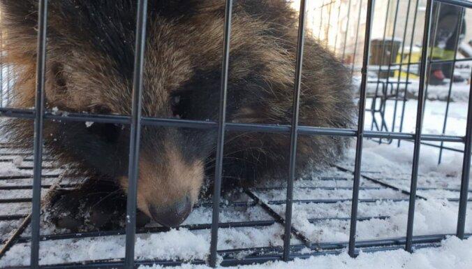 В Риге пожарные спасли енотовидную собаку, выжившую после трех дней пожара в здании