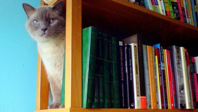 Pasaules visvairāk tulkotās grāmatas: Top 20