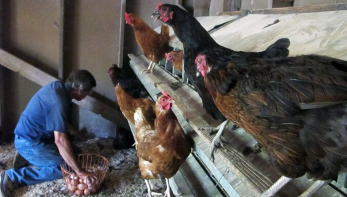 Lietuvā mājputnu novietnē konstatēts augsti patogēnās putnu gripas uzliesmojums