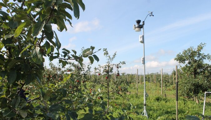 Tonnām jēpju un sava meteo stacija: kā Saldus novadā audzē ābolus