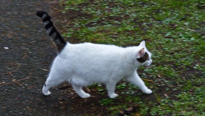 Что может рассказать хвост о настроении кошки?