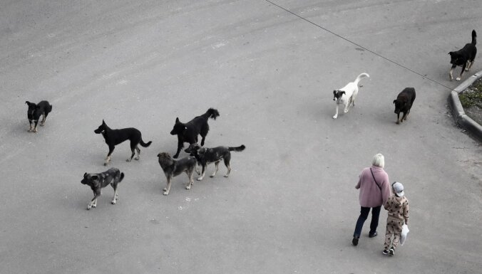 Ulanudē agresīvu suņu dēļ grasās apturēt likumu par humānu attieksmi pret dzīvniekiem