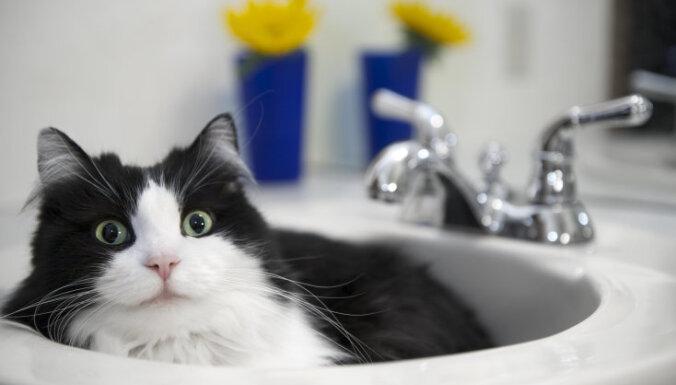 Семь вещей, которые вам хотел бы сказать ваш кот