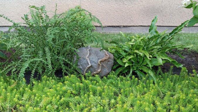Foto: Koši kā novada brunči – šīs vasaras sakoptākie īpašumi Nīcā