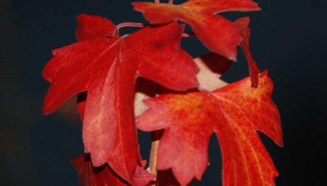 Augļu un ogu dārzs: aktuālie darbi novembrī un decembrī