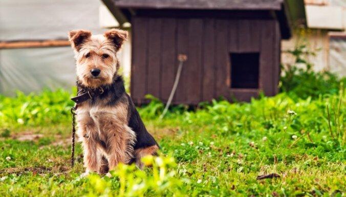 Aktuāli jautājumi un atbildes par obligāto suņu čipēšanu un reģistrēšanu
