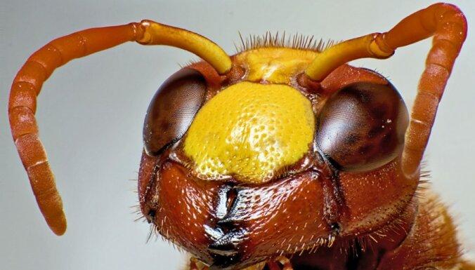Skaisti un biedīgi kadri: Kukaiņu sejas tuvplānā
