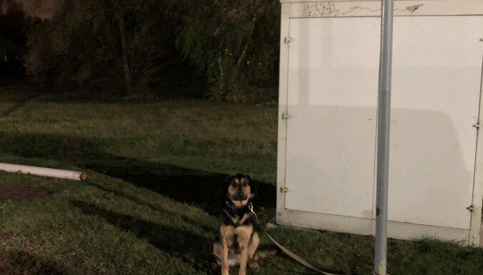 Привязала и забыла: полиция нашла женщину, оставившую щенка на ночь у магазина