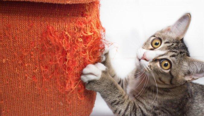ВИДЕО: Китаец заплатил $35 тысяч за клонирование умершего кота