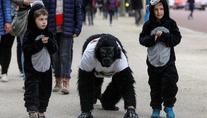Par gorillu pārģērbies vīrietis sešās dienās pieveic Londonas maratonu