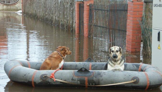 Daugavpils novadā no plūdu zonas izglābti trīs suņi