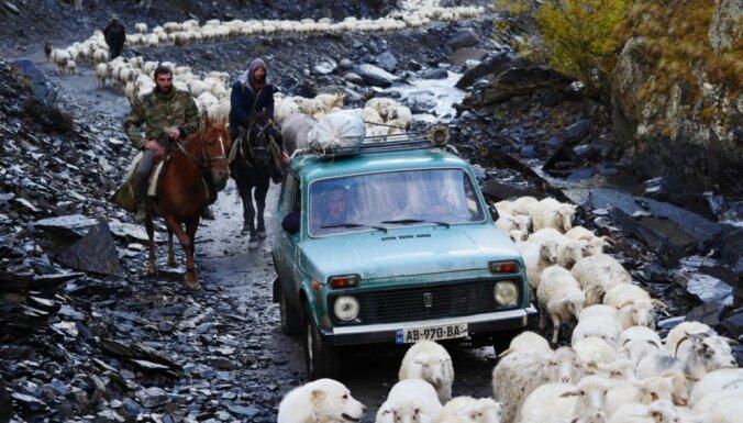 ФОТО: Как пастухи и овцы преодолевают опасную дорогу в горах Грузии