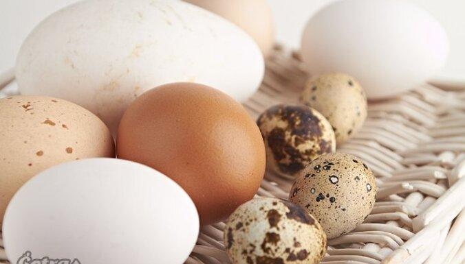 Ikdienas nemanāmais pavadonis – ola