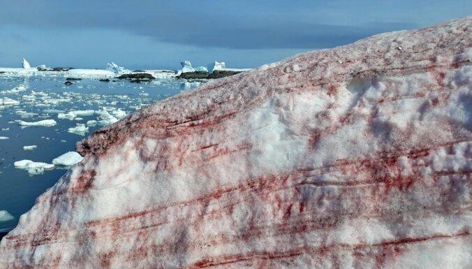 """""""Кровавый снег"""" покрыл землю вокруг научной станции в Антарктиде"""