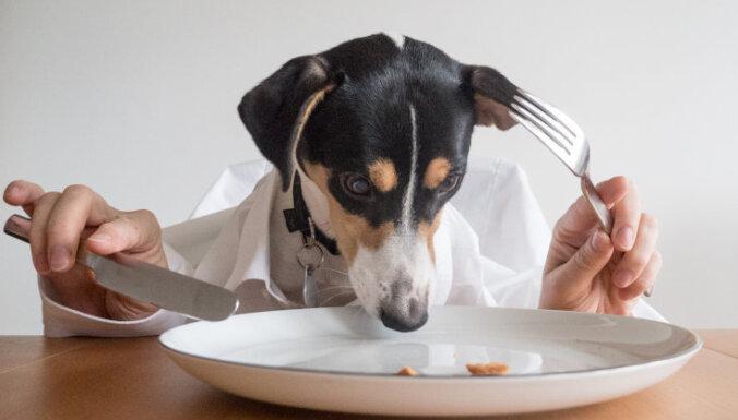 5 ваших любимых продуктов, которые смертельно опасны для собак