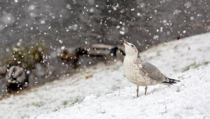 Naktī un no rīta vietām Kurzemē stipri snigs