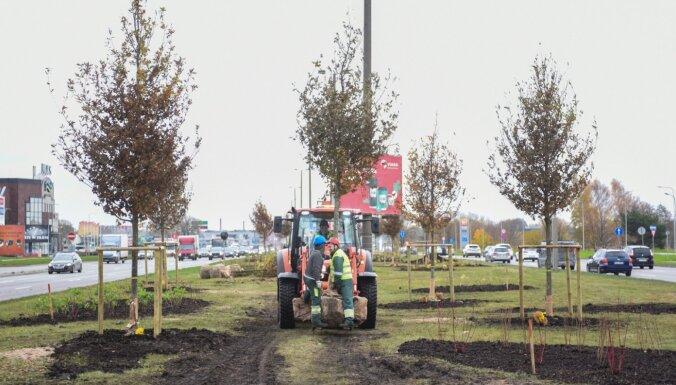 ФОТО: На ул.Краста в Риге начали посадку 120 деревьев и 2433 кустов