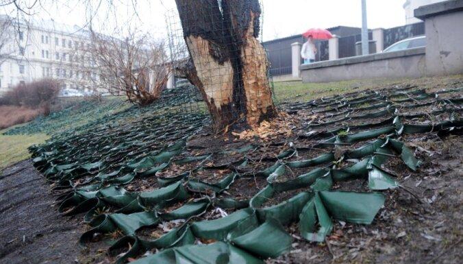 На защиту деревьев и подкормку бобров нужно 8635 латов