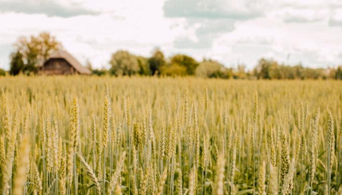 Земельная реформа: как будет работать рынок земли в Украине