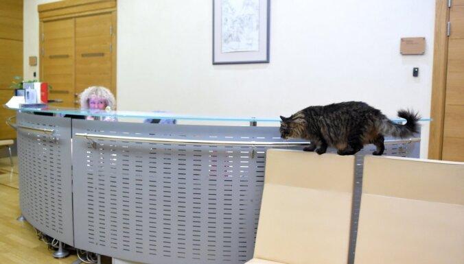 Rīgas domes kaķis Kuzja Rātsnamā neatgriezīsies