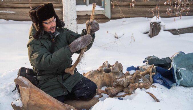Tikai uzmanīgi! Mūžīgajā sasalumā atrasto dzīvnieku paliekās meklē aizvēsturiskus vīrusus