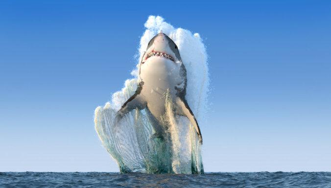 Акулы стали нападать на людей чаще. Зато жертвы теперь погибают все реже