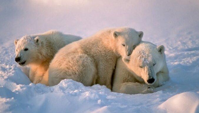 """""""А мы пингвинчики, а нам не холодно"""": ТОП-6 животных, которым холод нипочем"""