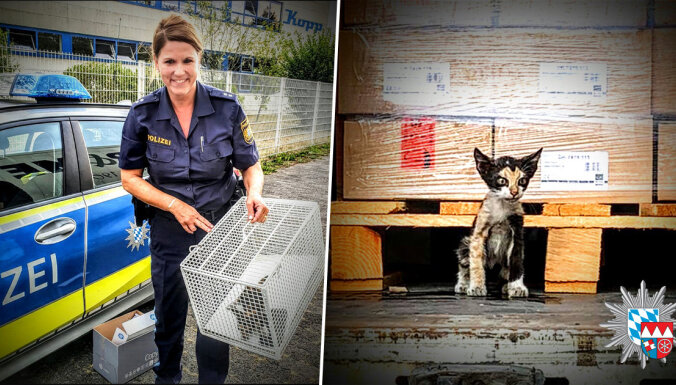 ФОТО: Кот доехал зайцем из Туниса в Германию в опломбированном грузовике