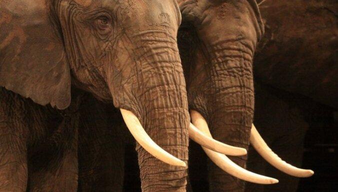 ПВС предлагает запретить использование диких животных в цирке