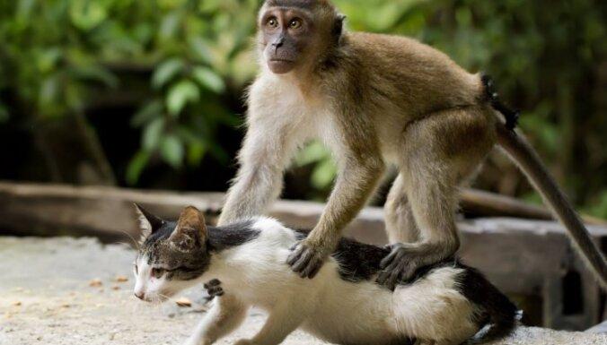 Foto: Makaks aizrautīgi masē kaķa muguru