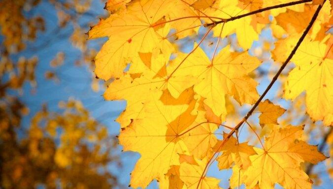 Синоптики: в среду ожидается солнечная погода