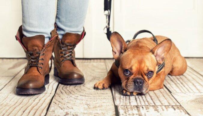 10 вещей, которые надо знать про обязательное чипирование и регистрацию собак