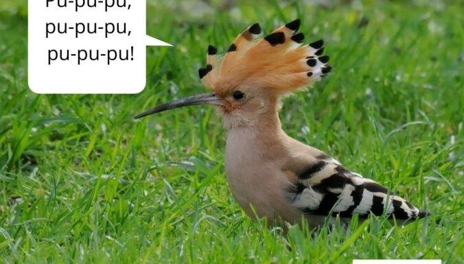 Ornitologi aicina ierakstīt un sūtīt putnu balsu piecminūtes