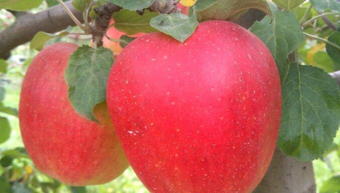 Dārza darbu kalendārs: augļu, dārzeņu un ogu dārzs oktobrī