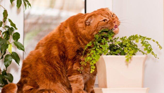 Augi pret kaķiem. Ieteikumi tiem, kas grib abus