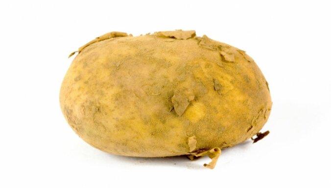 Ar kartupeli 'bruņojies' vīrietis cenšas aplaupīt veikalu