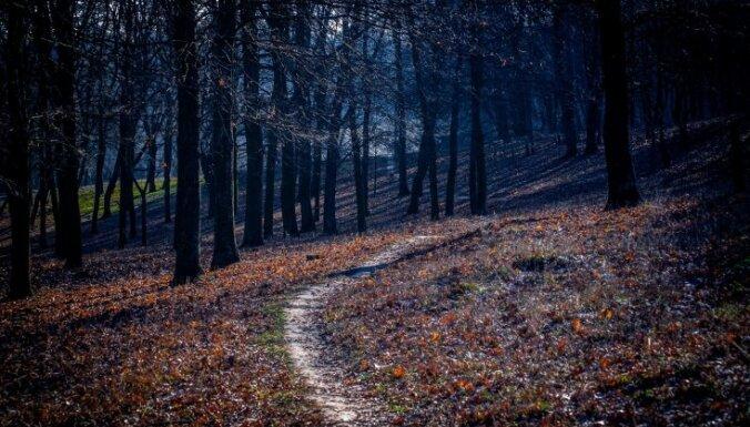 Темный лес, темные тайны: шесть самых мрачных и мистических лесов в мире