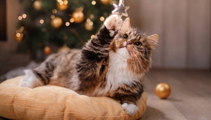 PVD aicina svētkos kā dāvanu nepasniegt mājdzīvniekus