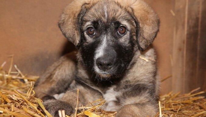 Вор, укравший ящик для пожертвований приюту животных Ulubele, отправлен в тюрьму
