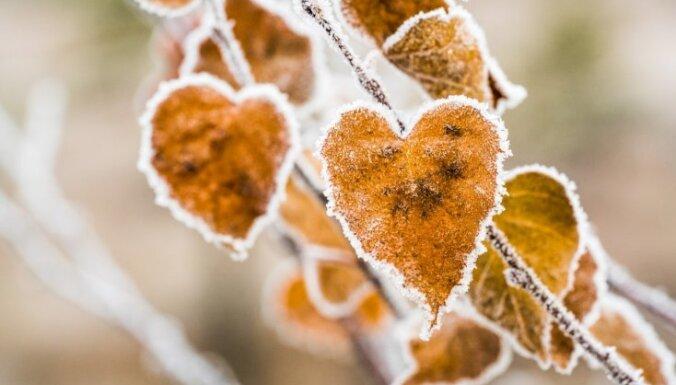 Во вторник утром во многих районах Латвии похолодало до +3..+8 градусов