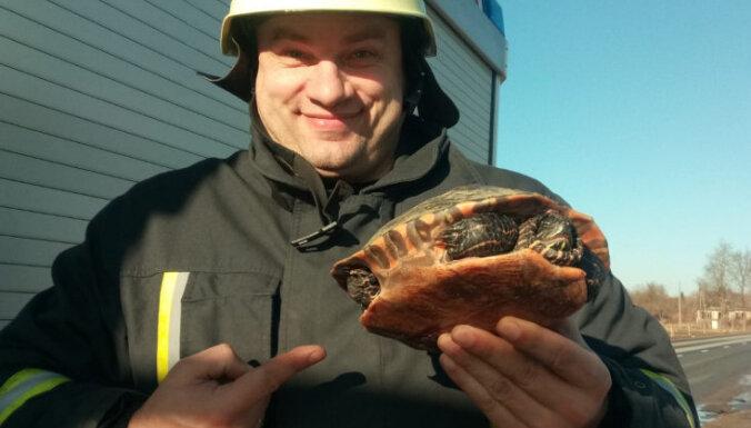 Saldū no ledus ugunsdzēsēji noceļ bruņurupuci